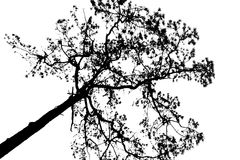 Dead tree silhouette. Royalty Free Stock Photo