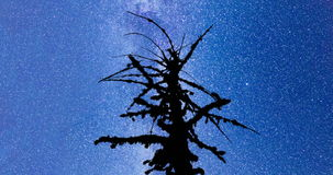 Dead tree silhouette Milky Way 4k timelapse. A view of the stars of the Milky Way. SIlhouette of a dead mossy tree in the foreground. Night sky nature summer stock video footage