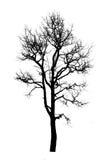 Dead tree silhouette Stock Image