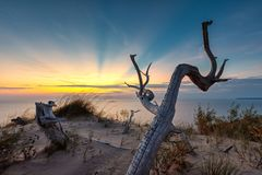 Sleeping Bear Dunes Sunset with Dead Tree. A dead tree is silhouetted against sunset rays over Lake Michigan at Sleeping Bear Dunes National Lakeshore in Royalty Free Stock Photo