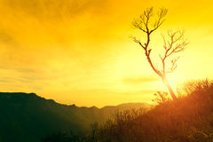 Dead tree silhouetted at sunset on mountain. Royalty Free Stock Image