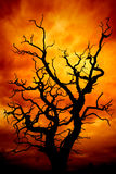Dead tree with sky Stock Photography