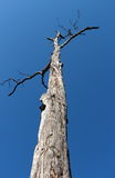 Dead tree in the sky Stock Images