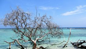 Dead Tree on Sombrero Cay. Beach scene on Sombrero Cay, Morrocoy National Park, Venezuela Stock Photo