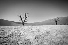 Dead tree in Sossusvlei in black and white. Royalty Free Stock Photos