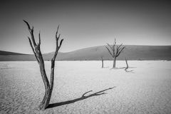Dead tree in Sossusvlei in black and white. Dead tree in black and white in Sossusvlei desert in Nambia Royalty Free Stock Photo
