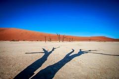 Dead tree in Sossusvlei desert. Dead tree in Sossusvlei in Namibia Stock Images