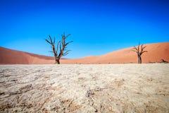 Dead tree in Sossusvlei desert. Dead tree in Sossusvlei in Namibia Royalty Free Stock Image