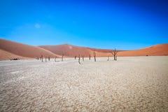 Dead tree in Sossusvlei desert. Dead tree in Sossusvlei in Namibia Royalty Free Stock Images