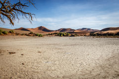 Dead tree in the Sossusvlei desert. Royalty Free Stock Photography