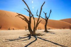 Dead tree in the Sossusvlei desert. Stock Photography