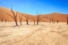 Dead tree in the Sossusvlei desert. Stock Photo