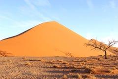 Dead tree Sossusvlei Dune 45 sunset, Nambia. Dead tree at Dune 45 during sunset in Sossusvlei, Namibia Stock Images