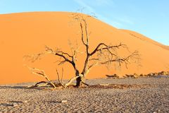 Dead tree Dune 45 sunset, Sossusvlei, Nambia Royalty Free Stock Photos