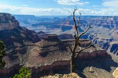 Dead Tree on the Grand Canyon Rim Royalty Free Stock Photography