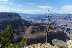 Dead Tree on the Grand Canyon Rim Stock Photo