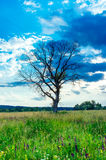Dead tree standing alone Stock Photos