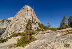 Dead tree standing in front of a dome, Yosemite Royalty Free Stock Photo