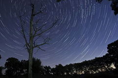Dead Tree Stars. The stars appear to rotate around this dead tree Stock Photos