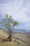 Dead Tree Still Standing on the Beach Royalty Free Stock Photo