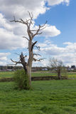 Dead tree still standing in the countryside Stock Photo
