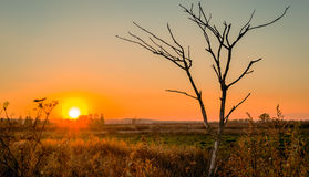 The dead tree still wants to live. The dead tree at sunset Royalty Free Stock Photography
