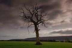 Dead tree stormy sky Royalty Free Stock Photo