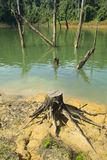 Dead tree stump royalty free stock image