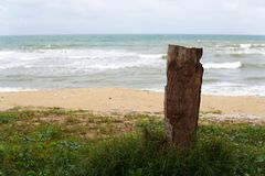 Dead tree stump on the beach in south china sea - Image royalty free stock photography