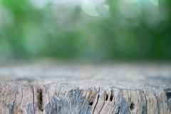 Dead tree Stump. With beautiful background Stock Photography