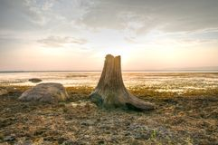 Dead Tree Stump on Sunset Background Royalty Free Stock Photo