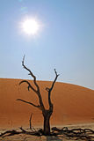 Dead tree in the sun Royalty Free Stock Photography