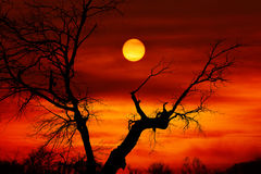 Dead tree sunset. Red sun and dead tree Stock Photo