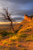 Dead Tree At Sunset Stock Photography