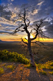 Dead Tree at Sunset. HDR image of dead tree against dramatic stormy sky taken in Mesa Verde National Park in Colorado royalty free stock image