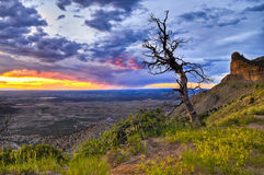 Dead Tree at Sunset. HDR image of dead tree against dramatic stormy sky taken in Mesa Verde National Park in Colorado stock images