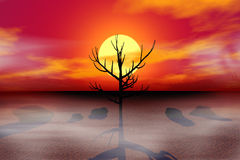 Dead tree at Sunset Stock Photo
