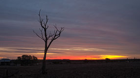 Dead Tree at sunset Stock Photos