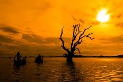 Dead tree in the sunset, Myanmar Stock Image