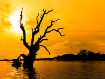 Dead tree in the sunset, Myanmar Royalty Free Stock Images