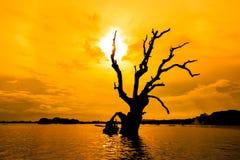 Dead tree in the sunset, Myanmar Stock Photos