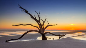 Dead tree sunset. Silhouette of a dead tree at sunset on the beach near Charleston, South Carolina Royalty Free Stock Photography