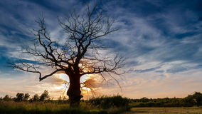 Dead Tree in Sunset. Summer meadow and a dead tree in the sunset stock image