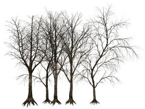 Dead Tree, Trees Illustration Isolated. Old dead tree or trees illustration. isolated on white. PNG file is available for additional format Royalty Free Stock Images