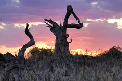 Dead tree trunk Royalty Free Stock Image