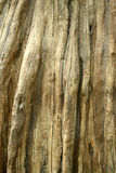 Dead tree trunk background Stock Photography