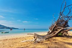 Dead tree trunk on beach Royalty Free Stock Photography