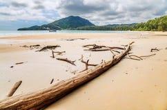 Dead tree trunk on beach Stock Image