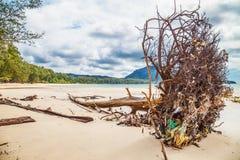 Dead tree trunk on beach Stock Photo