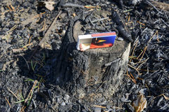 Dead tree trunk after fire. Stock Photography